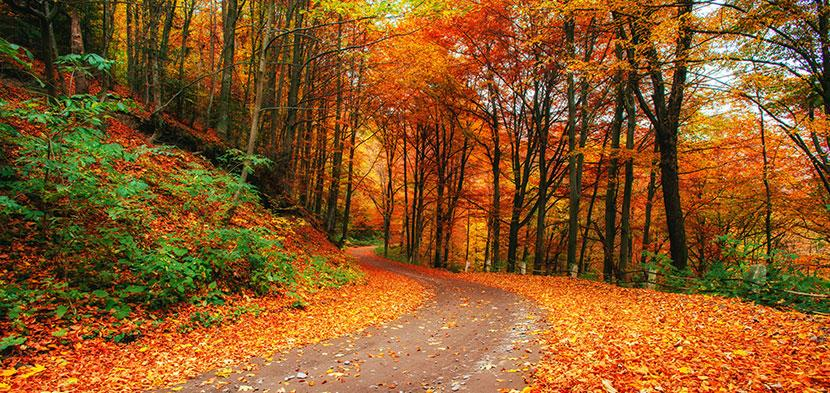 autumn places to visit inner